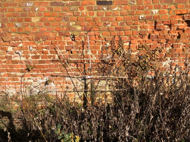 An apricot tree spreading its branches against a sun drenched 17th century brick wall.